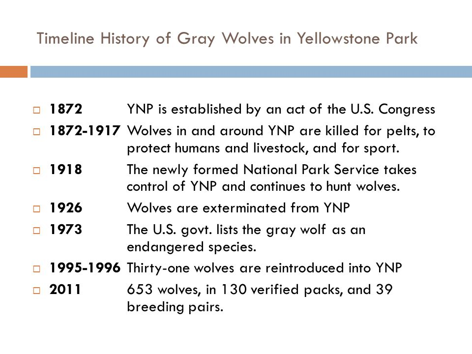 Timeline History of Gray Wolves in Yellowstone Park