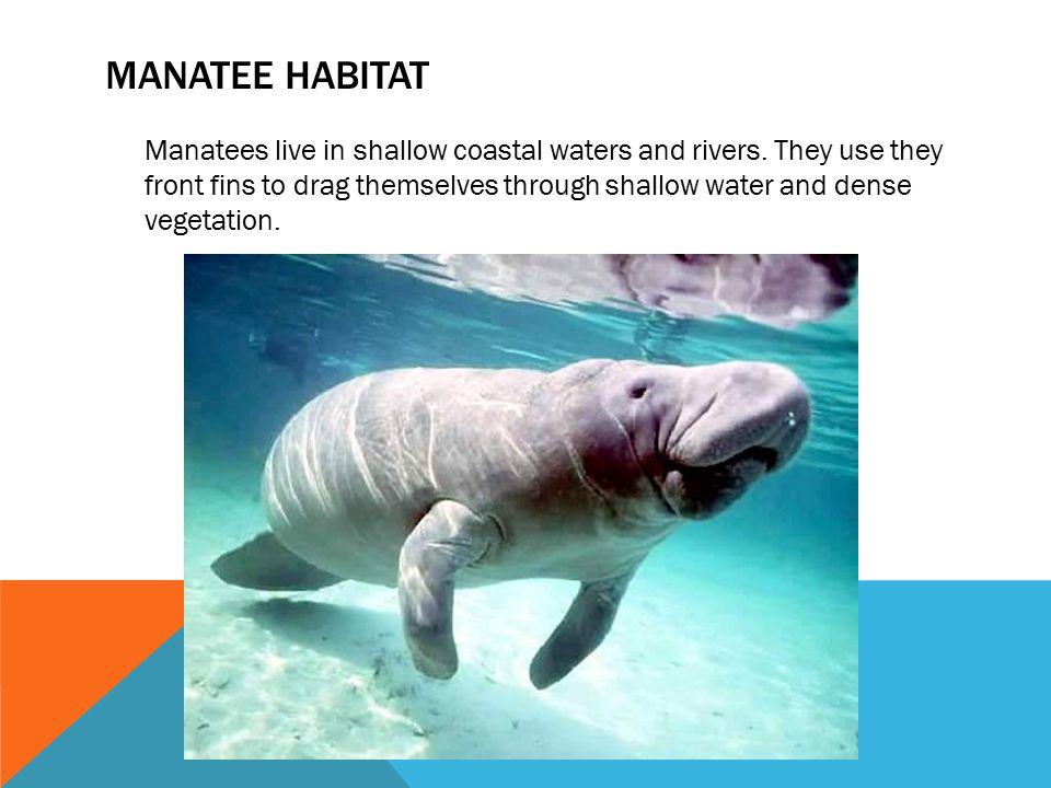 Manatee habitat