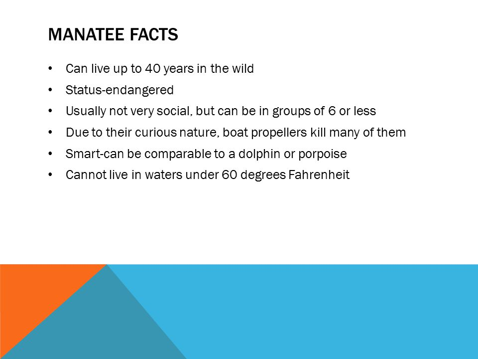 Manatee facts Can live up to 40 years in the wild Status-endangered