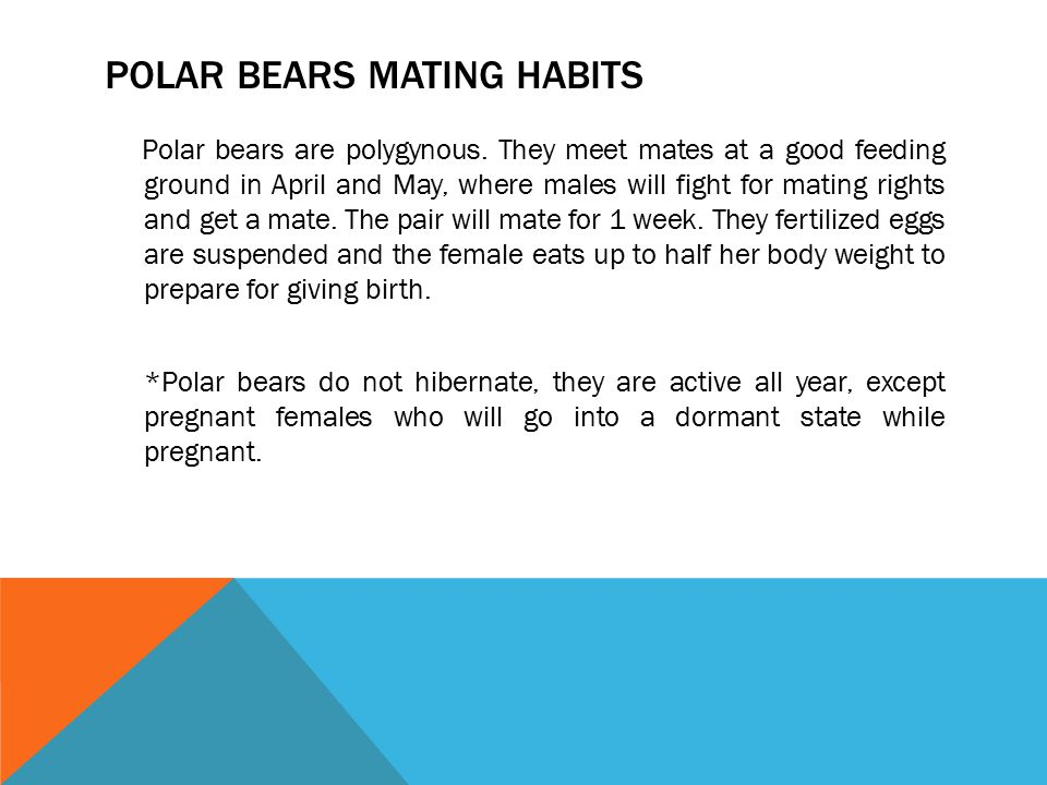 Polar bears Mating habits