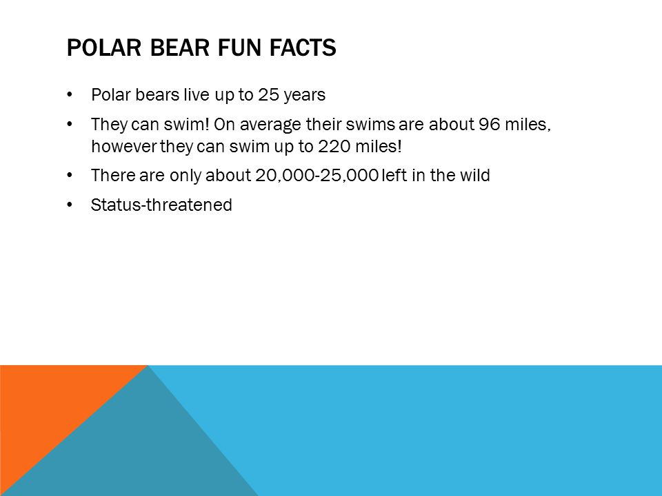Polar bear fun facts Polar bears live up to 25 years