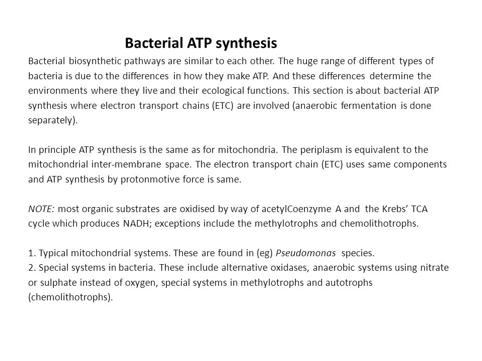 Bacterial ATP synthesis