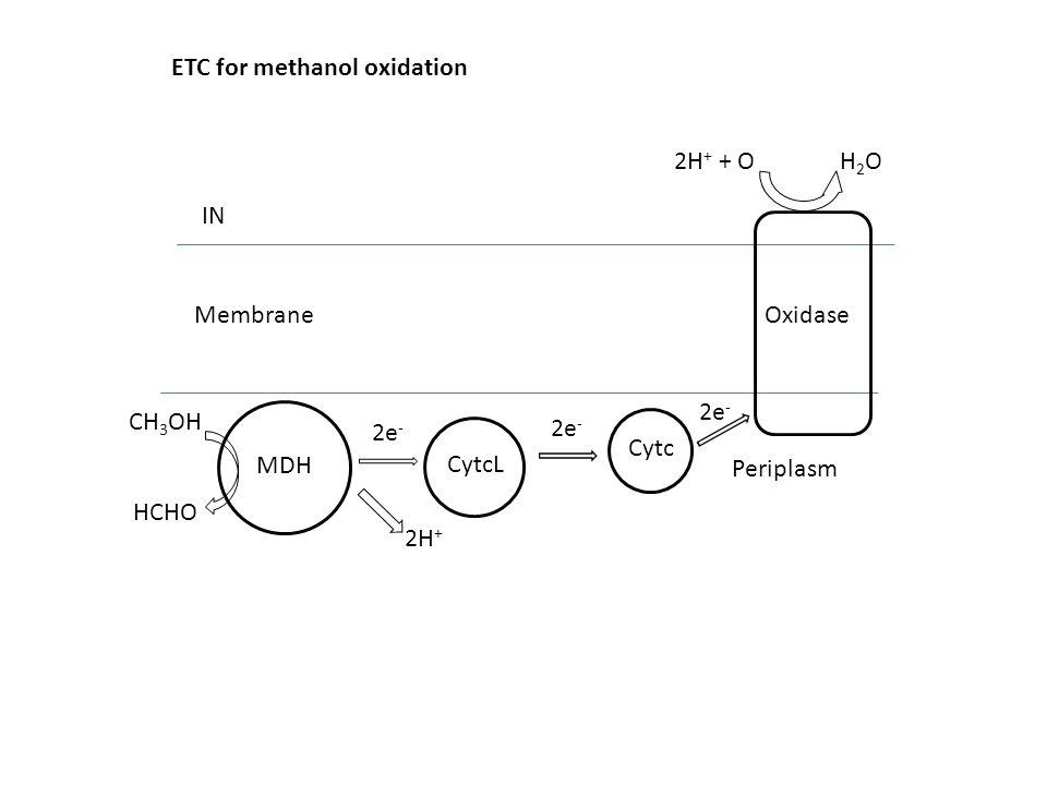 ETC for methanol oxidation