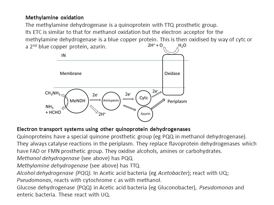 Methylamine oxidation