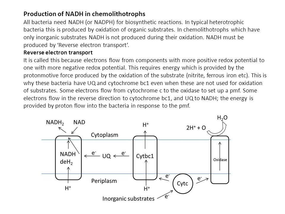 Production of NADH in chemolithotrophs