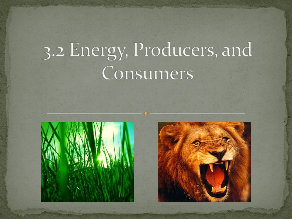 3.2 Energy, Producers, and Consumers