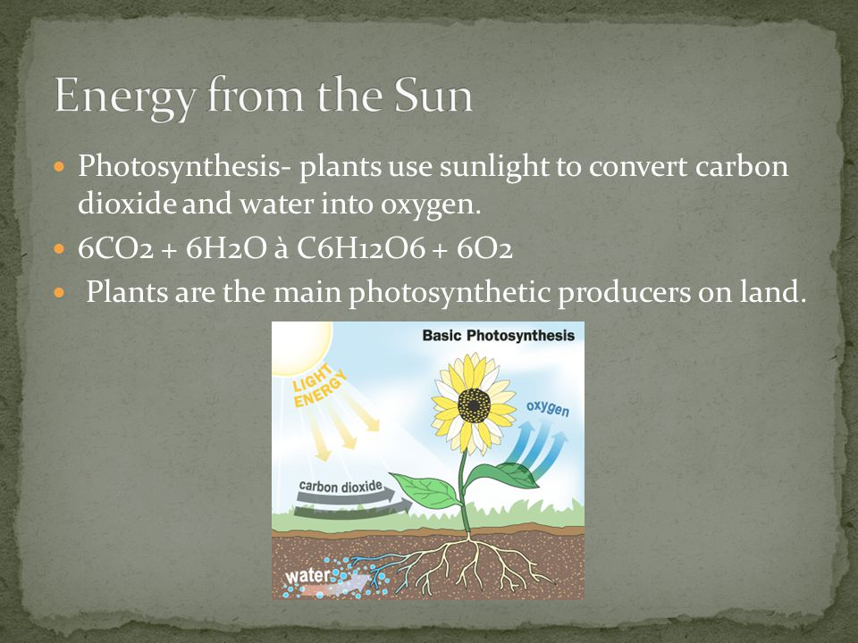 Energy from the Sun Photosynthesis- plants use sunlight to convert carbon dioxide and water into oxygen.
