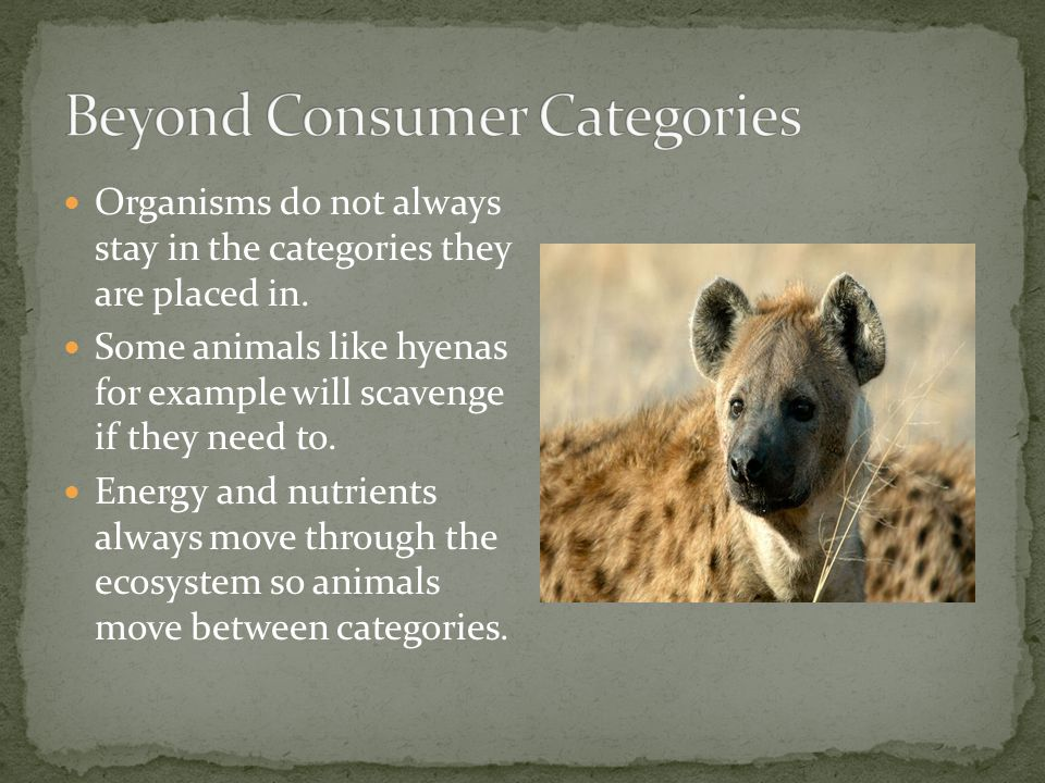 Beyond Consumer Categories