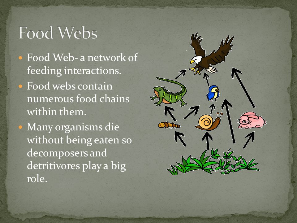 Food Webs Food Web- a network of feeding interactions.