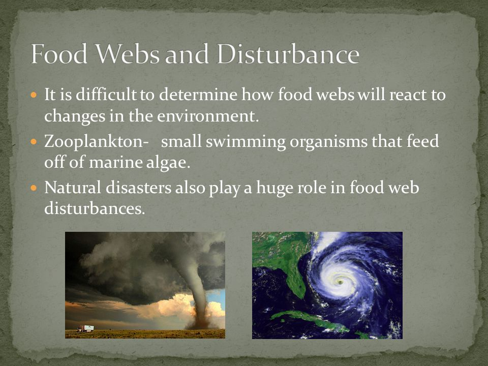Food Webs and Disturbance
