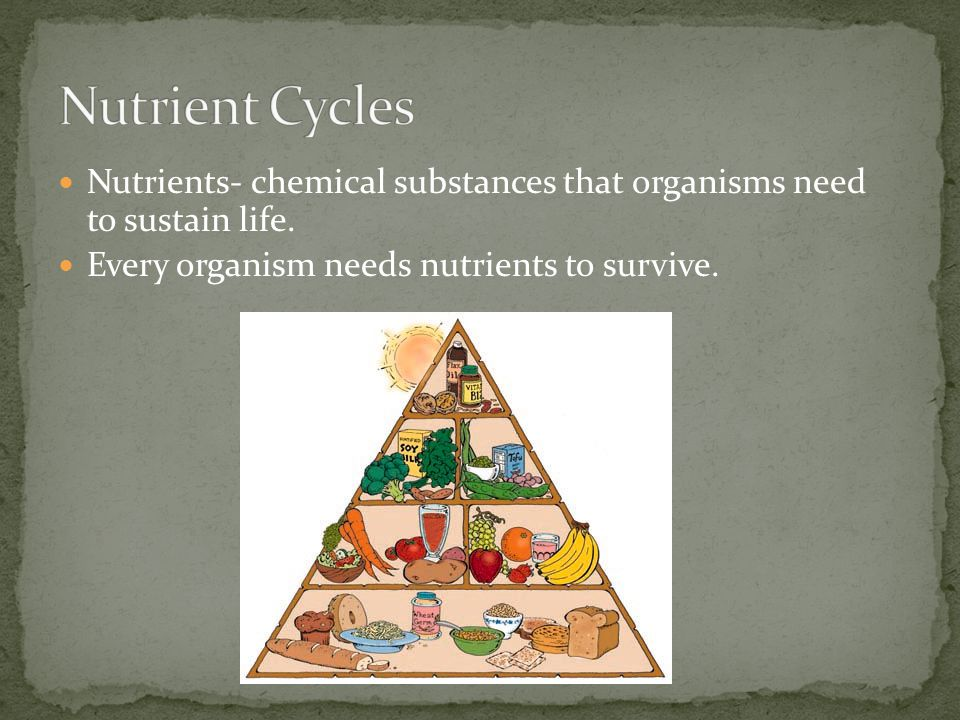 Nutrient Cycles Nutrients- chemical substances that organisms need to sustain life.