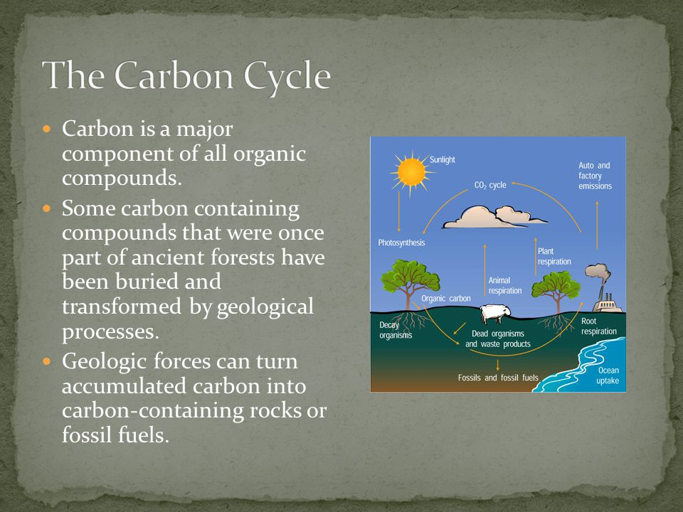 The Carbon Cycle Carbon is a major component of all organic compounds.