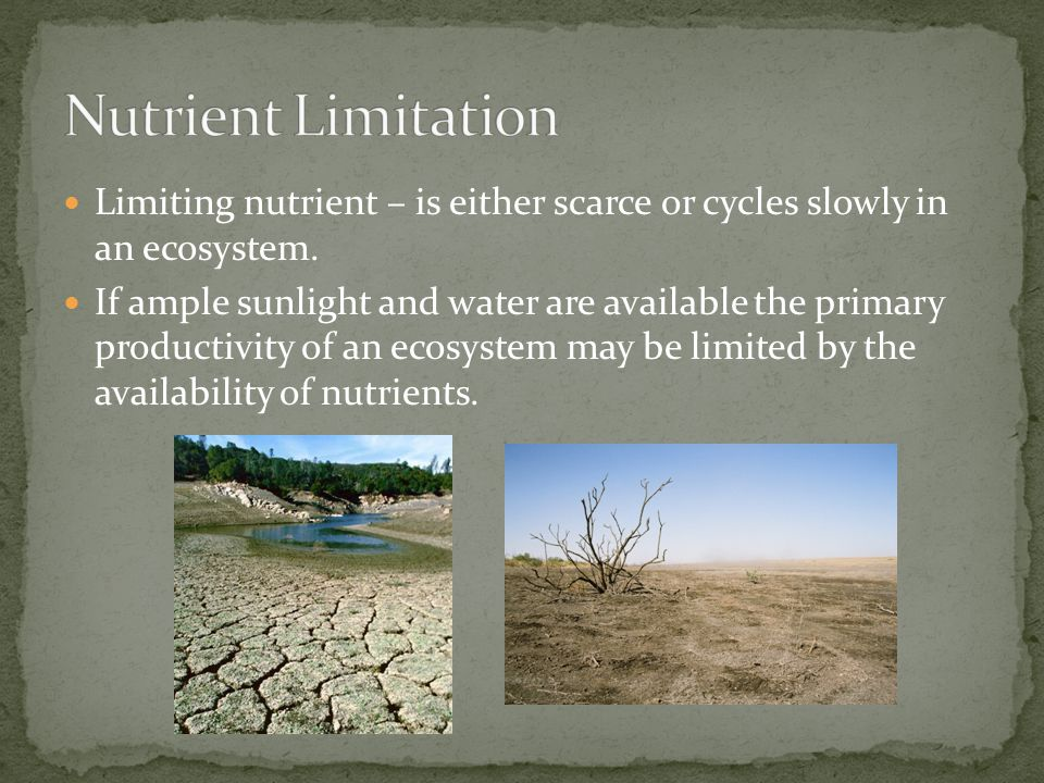 Nutrient Limitation Limiting nutrient – is either scarce or cycles slowly in an ecosystem.