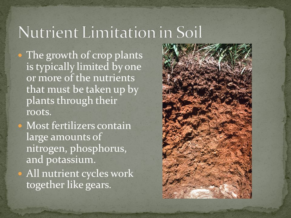 Nutrient Limitation in Soil