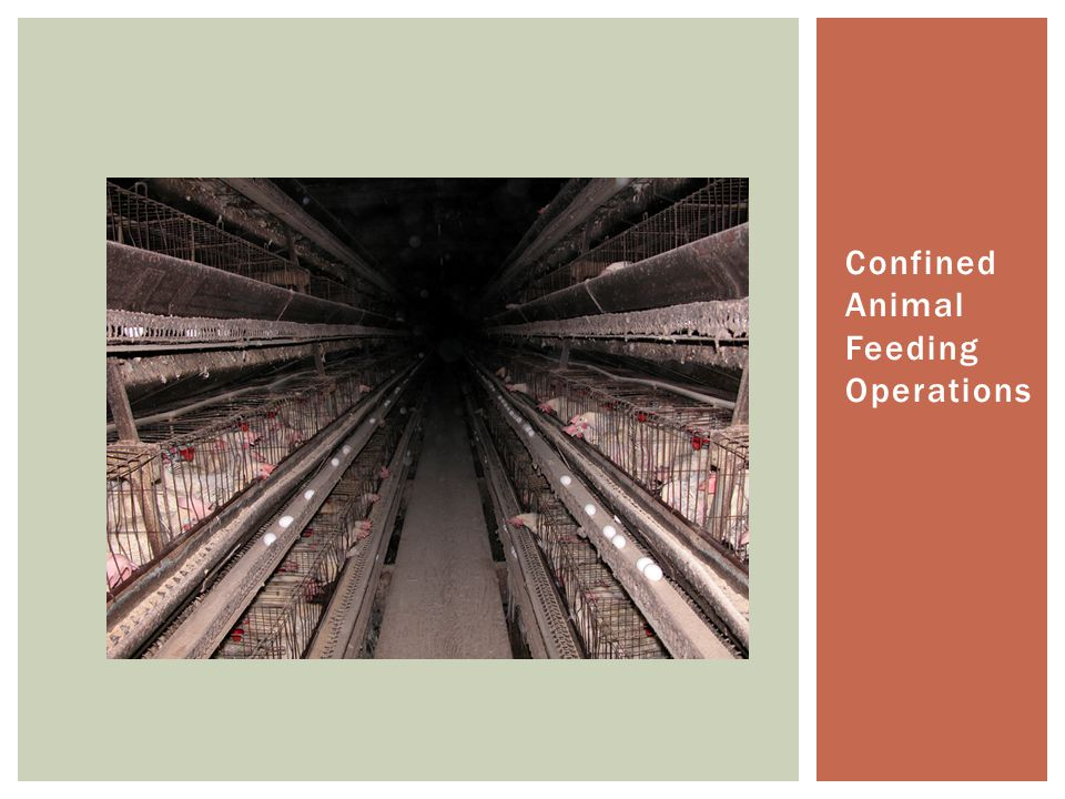 Confined Animal Feeding Operations