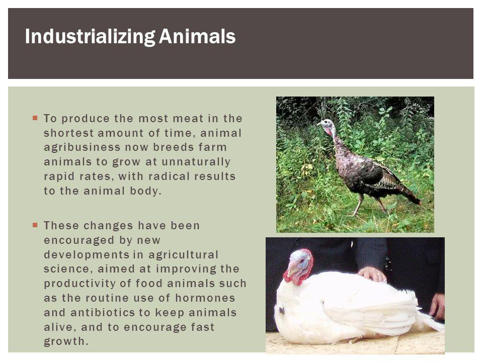 Industrializing Animals