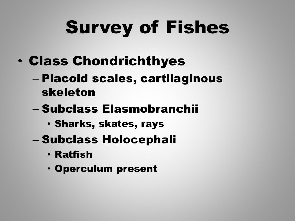 Survey of Fishes Class Chondrichthyes