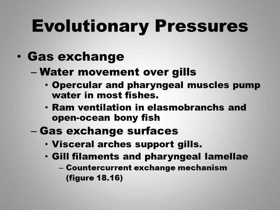 Evolutionary Pressures
