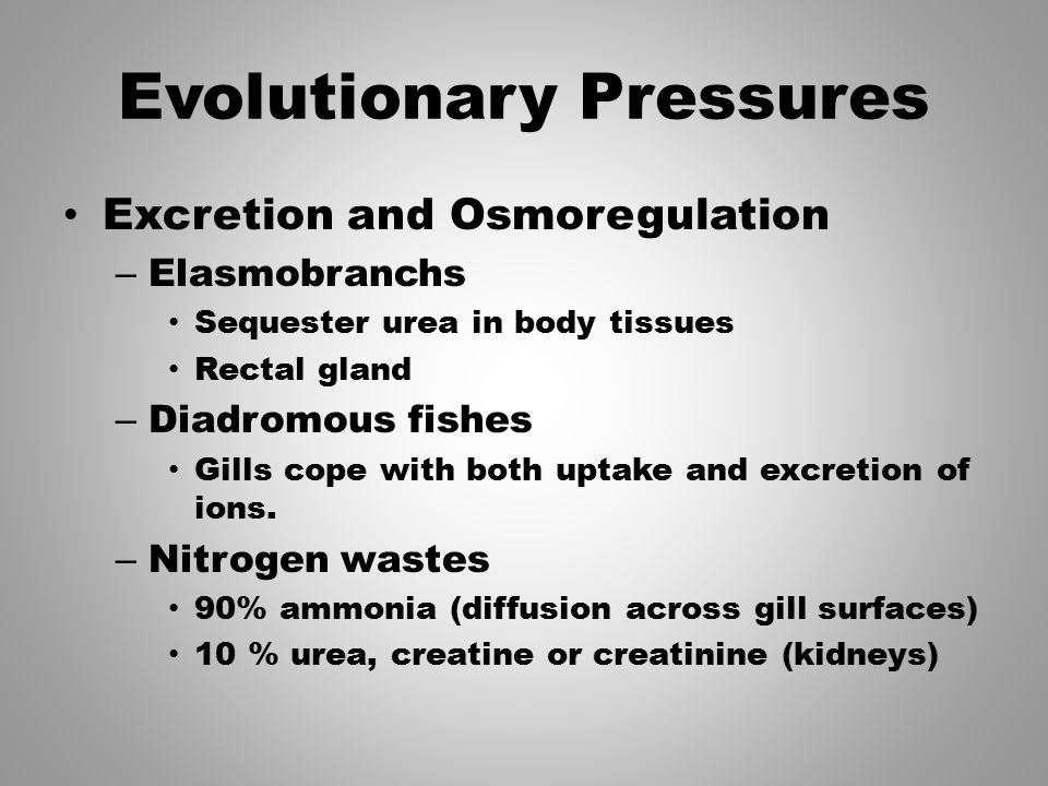 Evolutionary Pressures