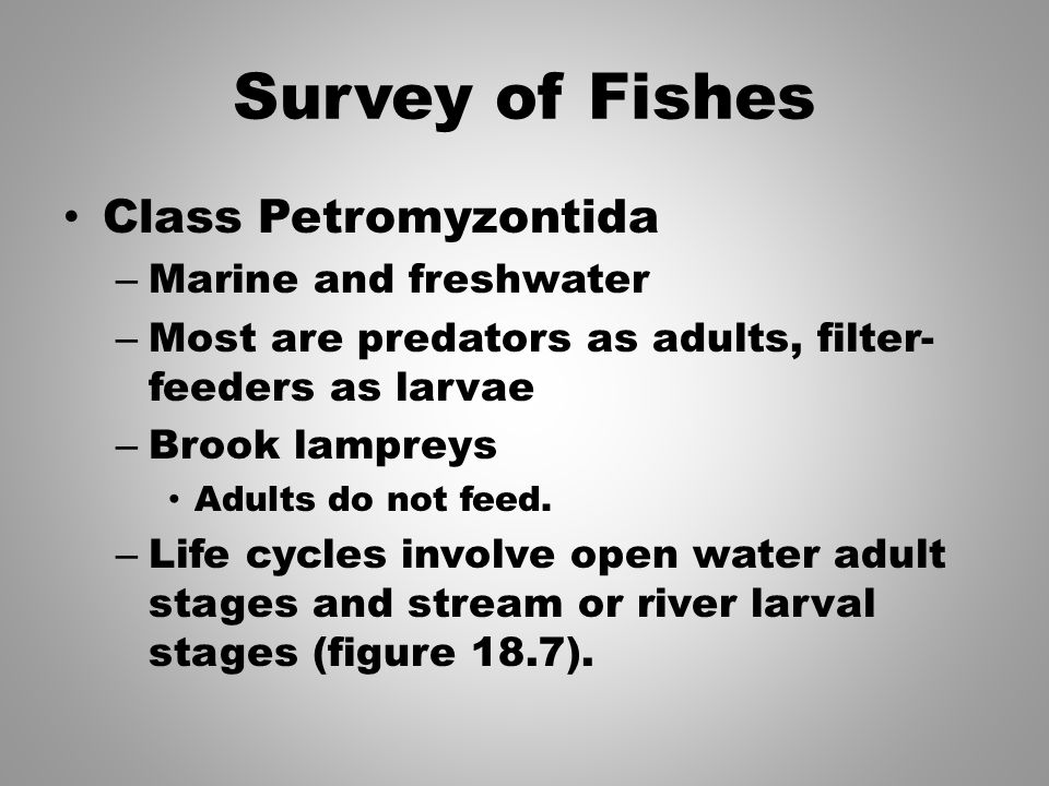 Survey of Fishes Class Petromyzontida Marine and freshwater