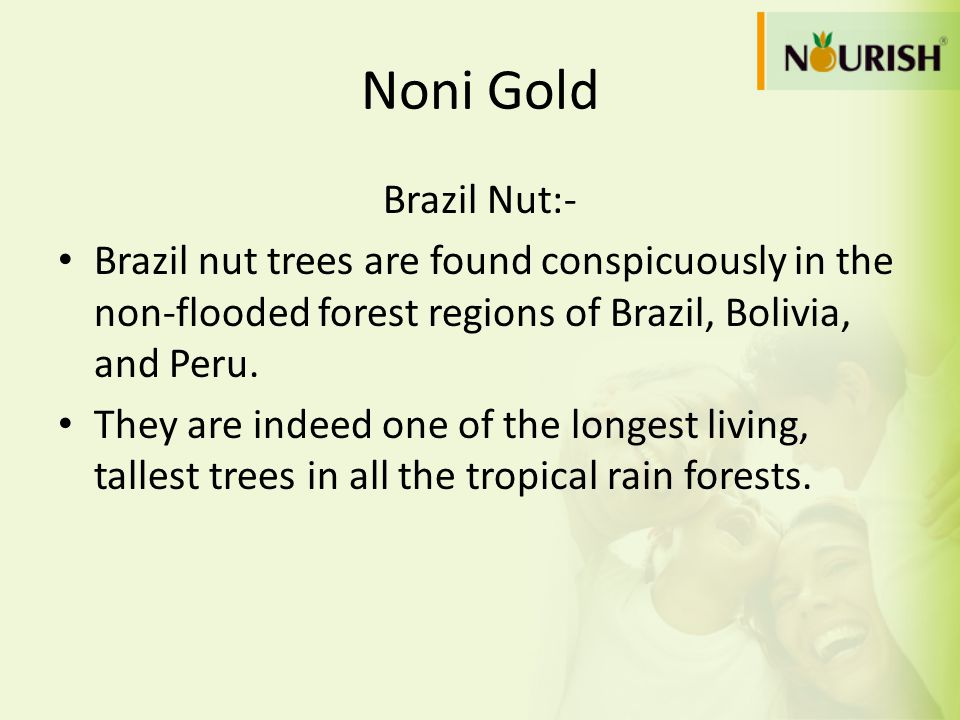 Noni Gold Brazil Nut:- Brazil nut trees are found conspicuously in the non-flooded forest regions of Brazil, Bolivia, and Peru.