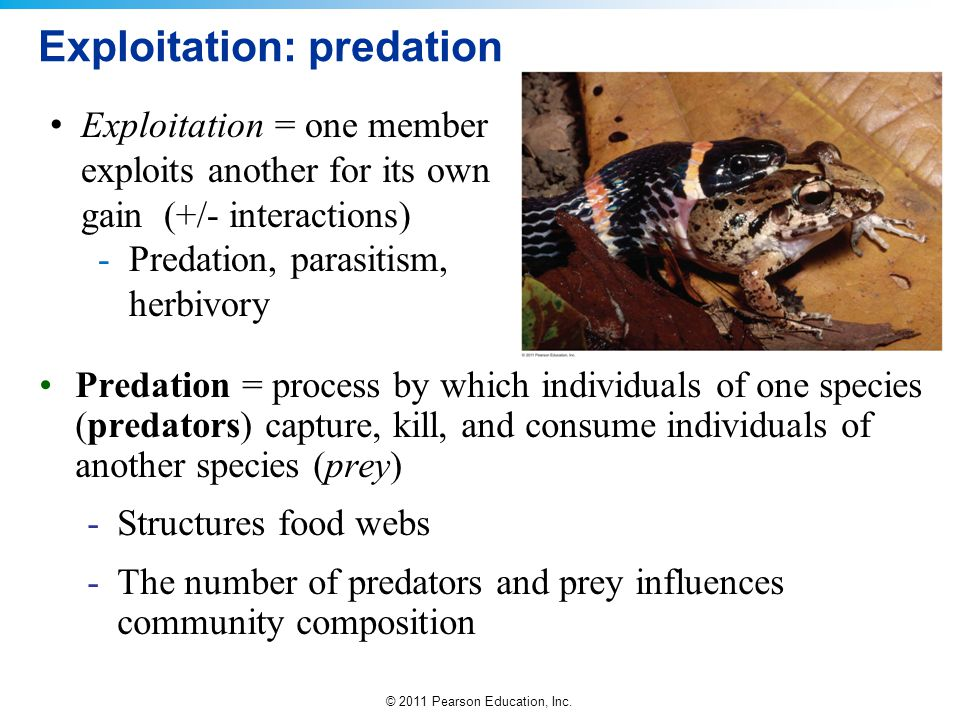 Exploitation: predation
