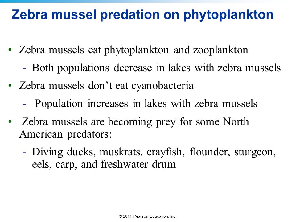 Zebra mussel predation on phytoplankton