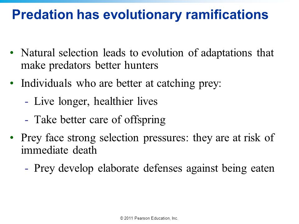 Predation has evolutionary ramifications