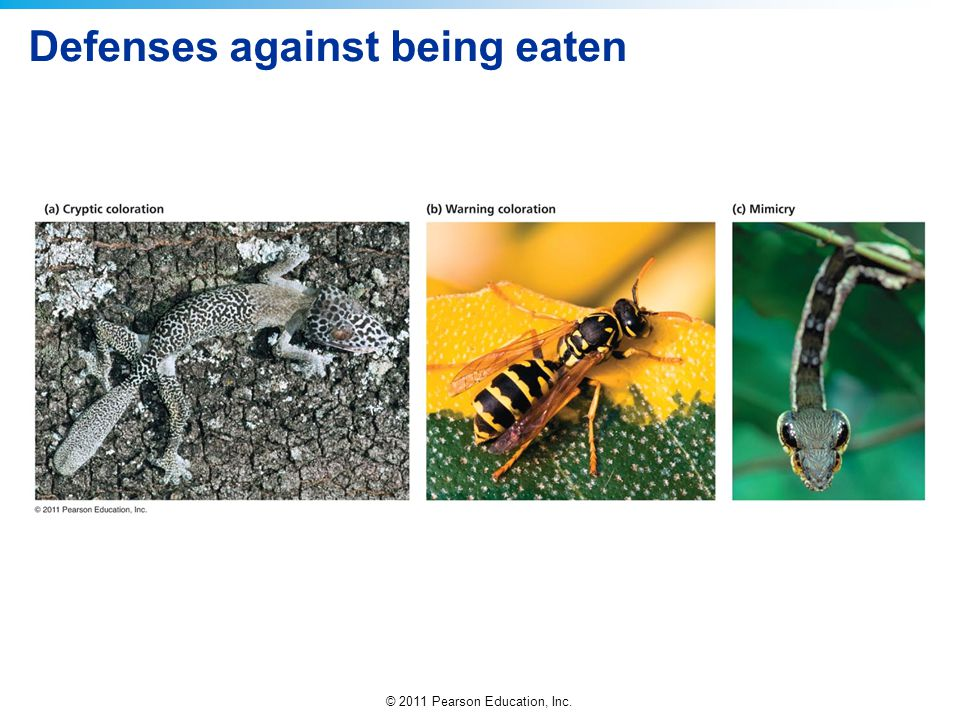 Defenses against being eaten