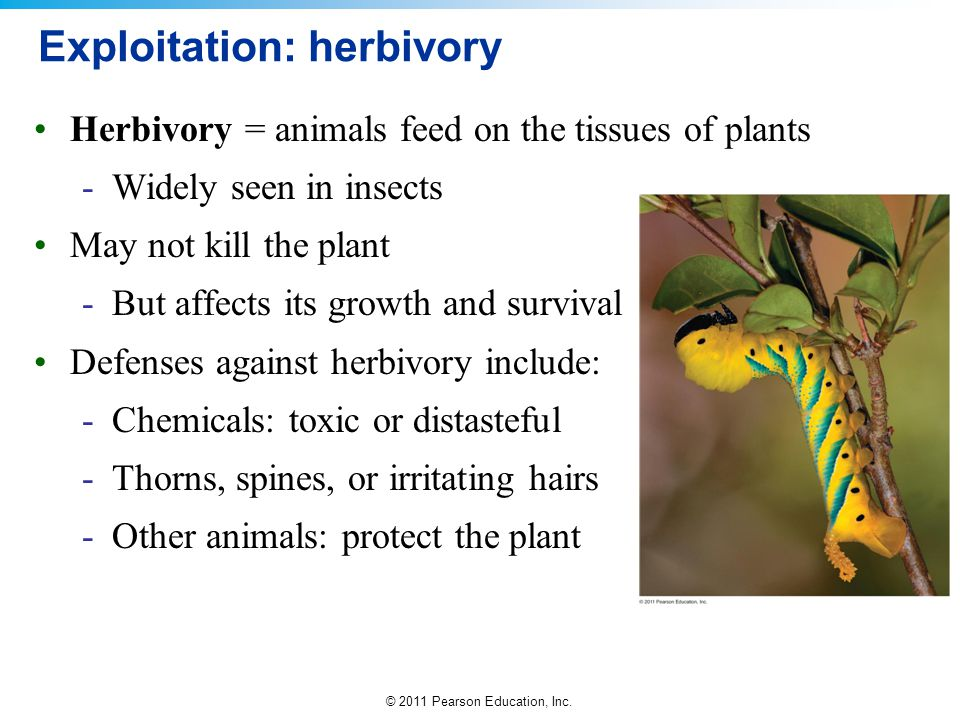 Exploitation: herbivory