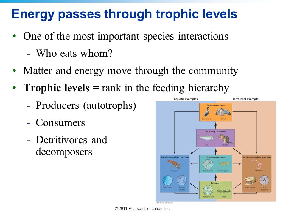 Energy passes through trophic levels