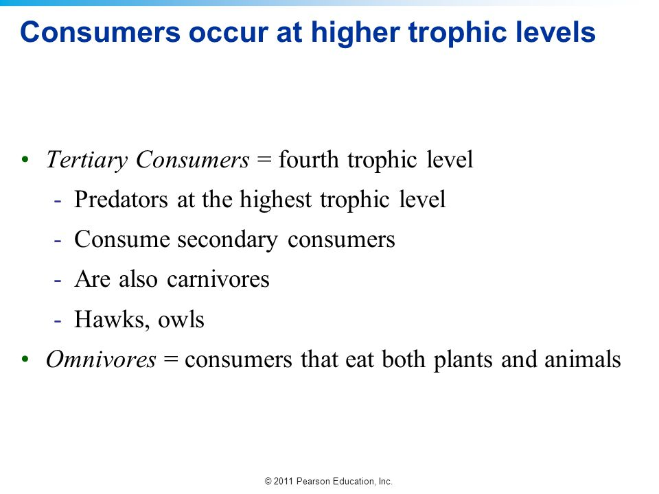 Consumers occur at higher trophic levels