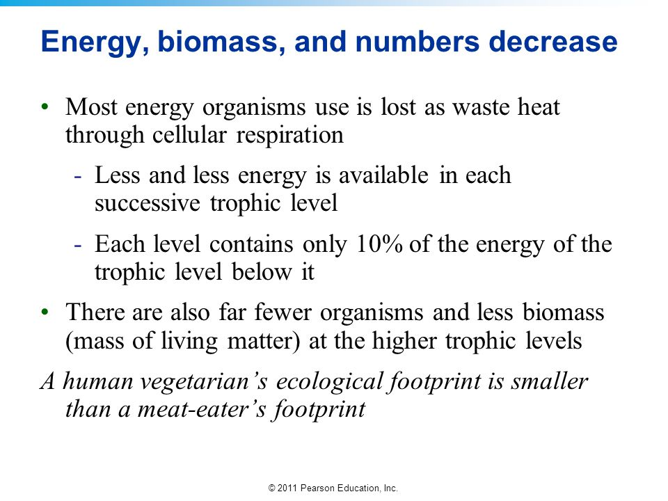 Energy, biomass, and numbers decrease