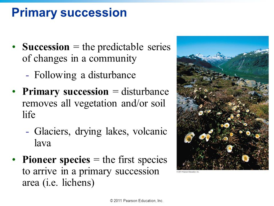 Primary succession Succession = the predictable series of changes in a community. Following a disturbance.