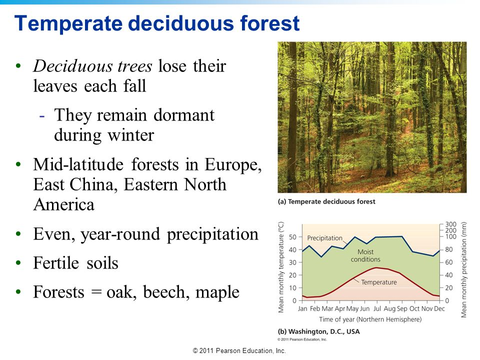 negative impact from human activity on temperate deciduouos forests around the world Human impact and interaction quiz human activity and pollution has caused global warming  deciduous forest.