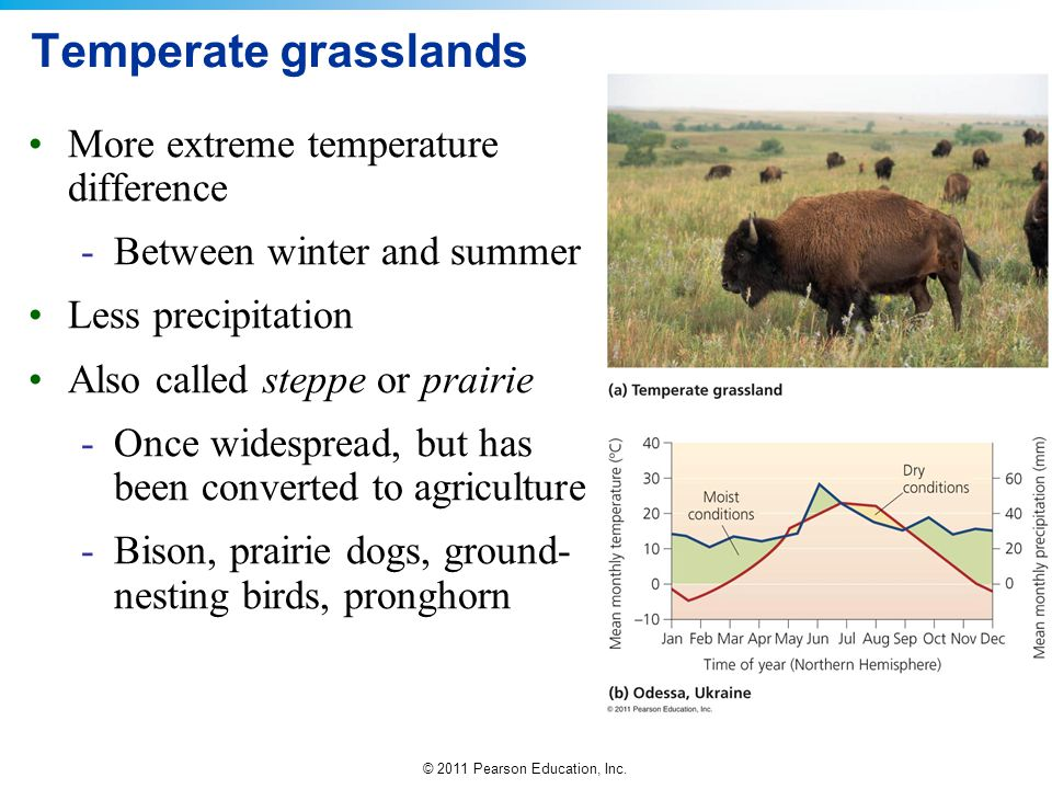 Temperate grasslands More extreme temperature difference