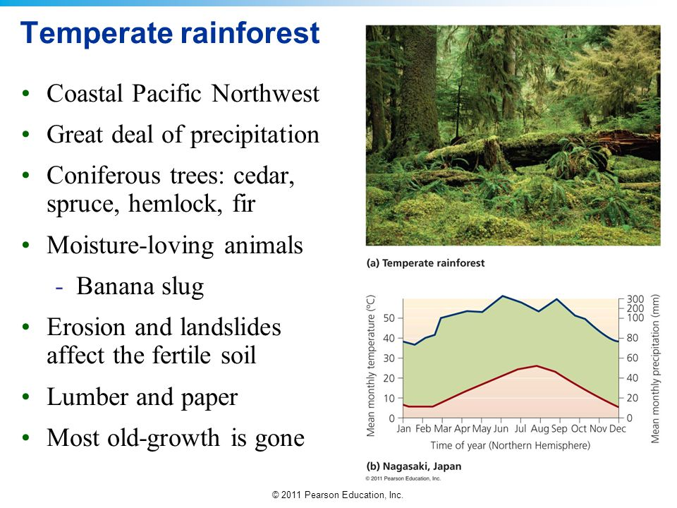Temperate rainforest Coastal Pacific Northwest