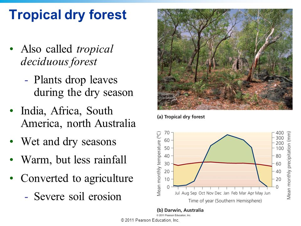 Tropical dry forest Also called tropical deciduous forest