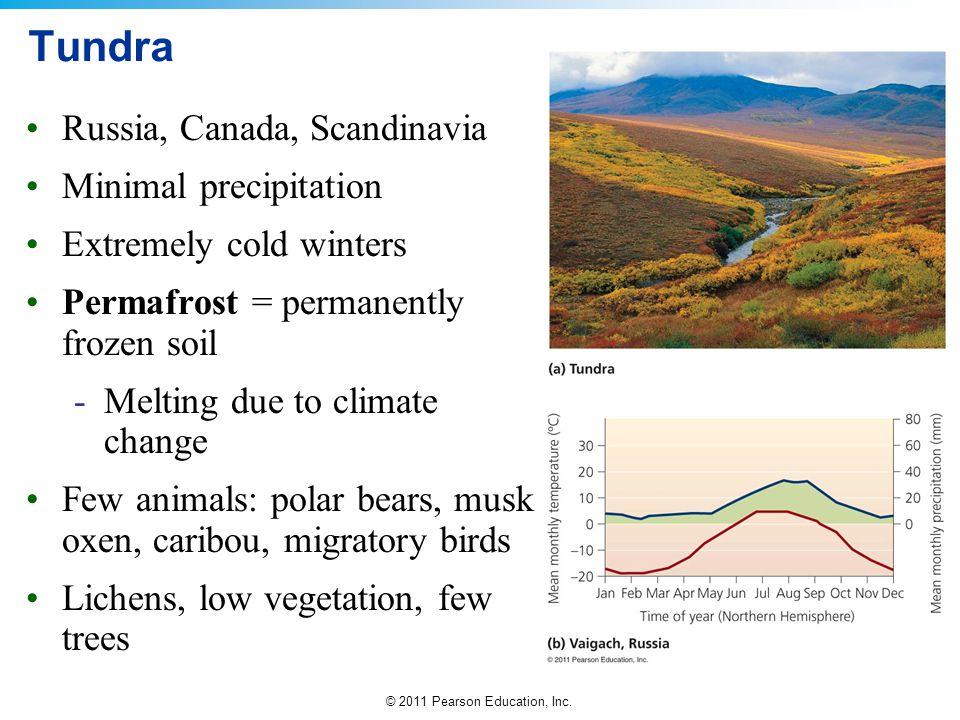 Tundra Russia, Canada, Scandinavia Minimal precipitation