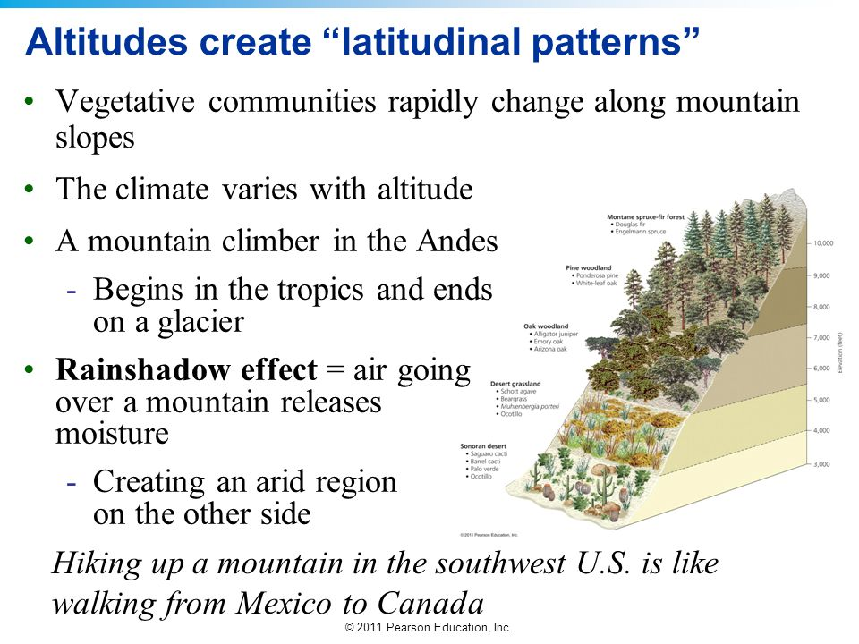 Altitudes create latitudinal patterns