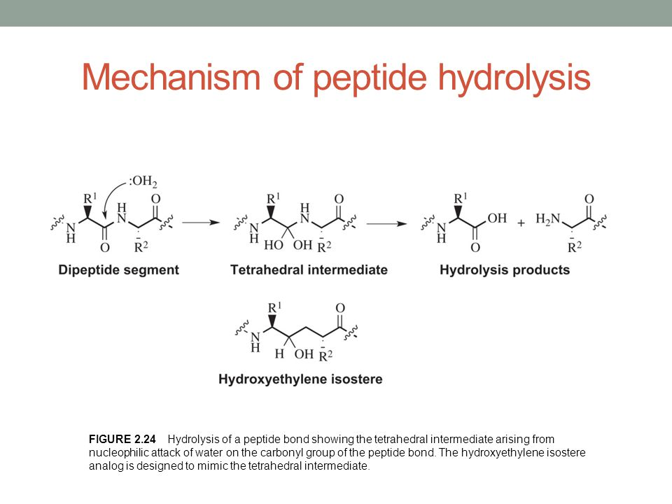 Mechanism of peptide hydrolysis