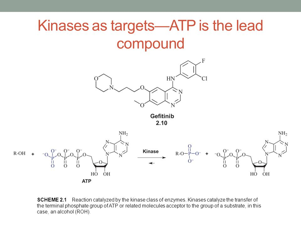 Kinases as targets—ATP is the lead compound