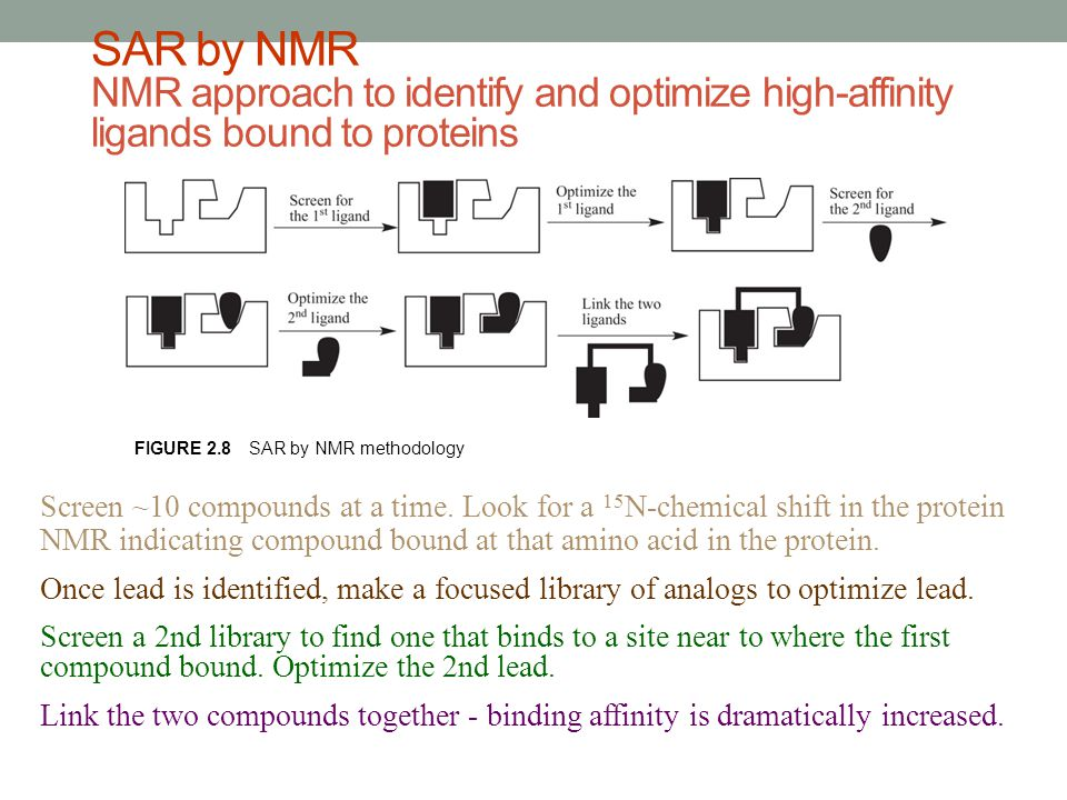 SAR by NMR NMR approach to identify and optimize high-affinity ligands bound to proteins