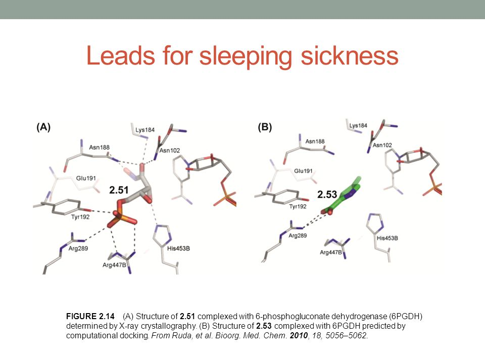 Leads for sleeping sickness