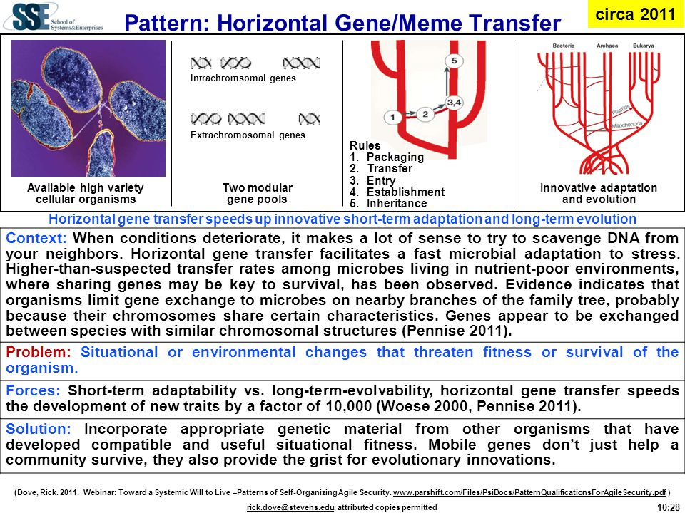 Pattern: Horizontal Gene/Meme Transfer