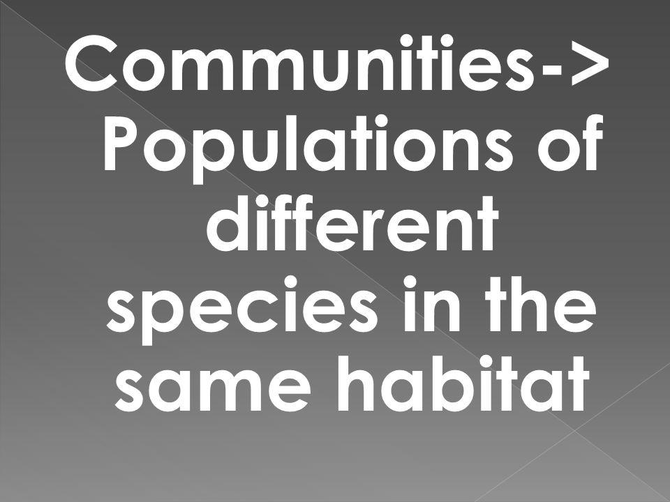 Communities-> Populations of different species in the same habitat