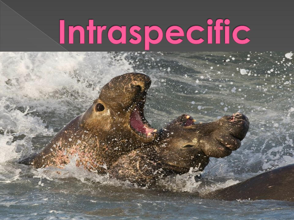 Intraspecific