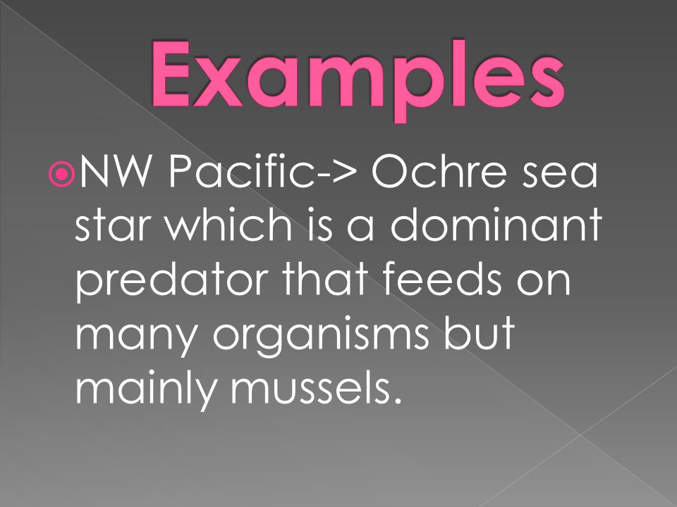Examples NW Pacific-> Ochre sea star which is a dominant predator that feeds on many organisms but mainly mussels.