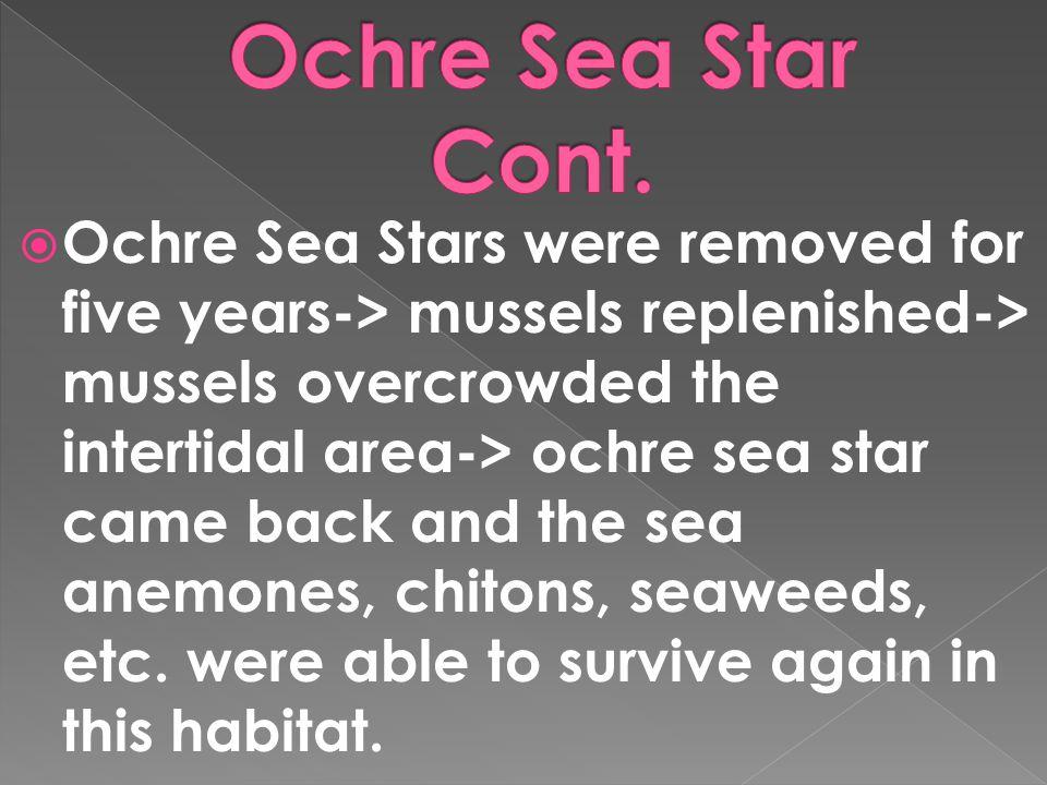 Ochre Sea Star Cont.