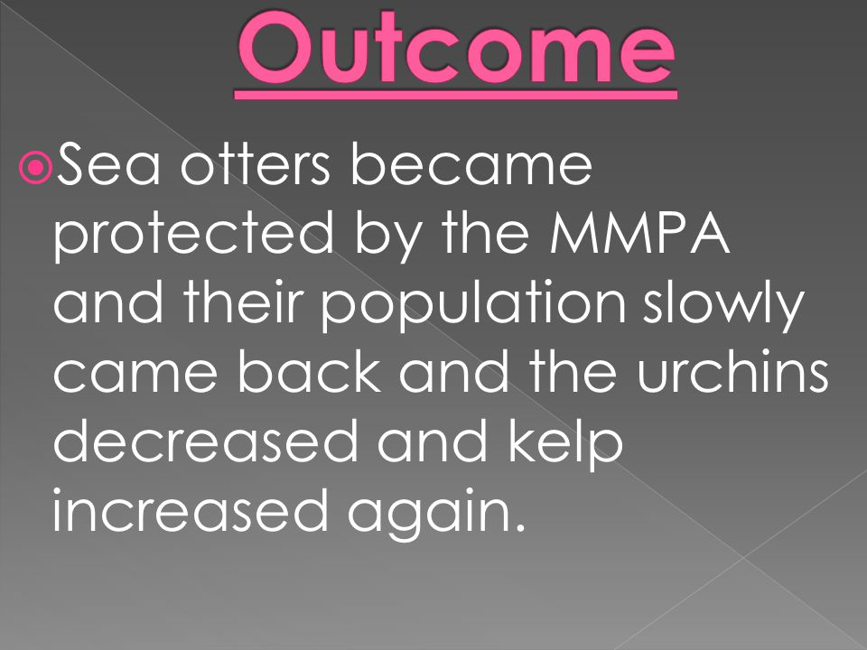 Outcome Sea otters became protected by the MMPA and their population slowly came back and the urchins decreased and kelp increased again.